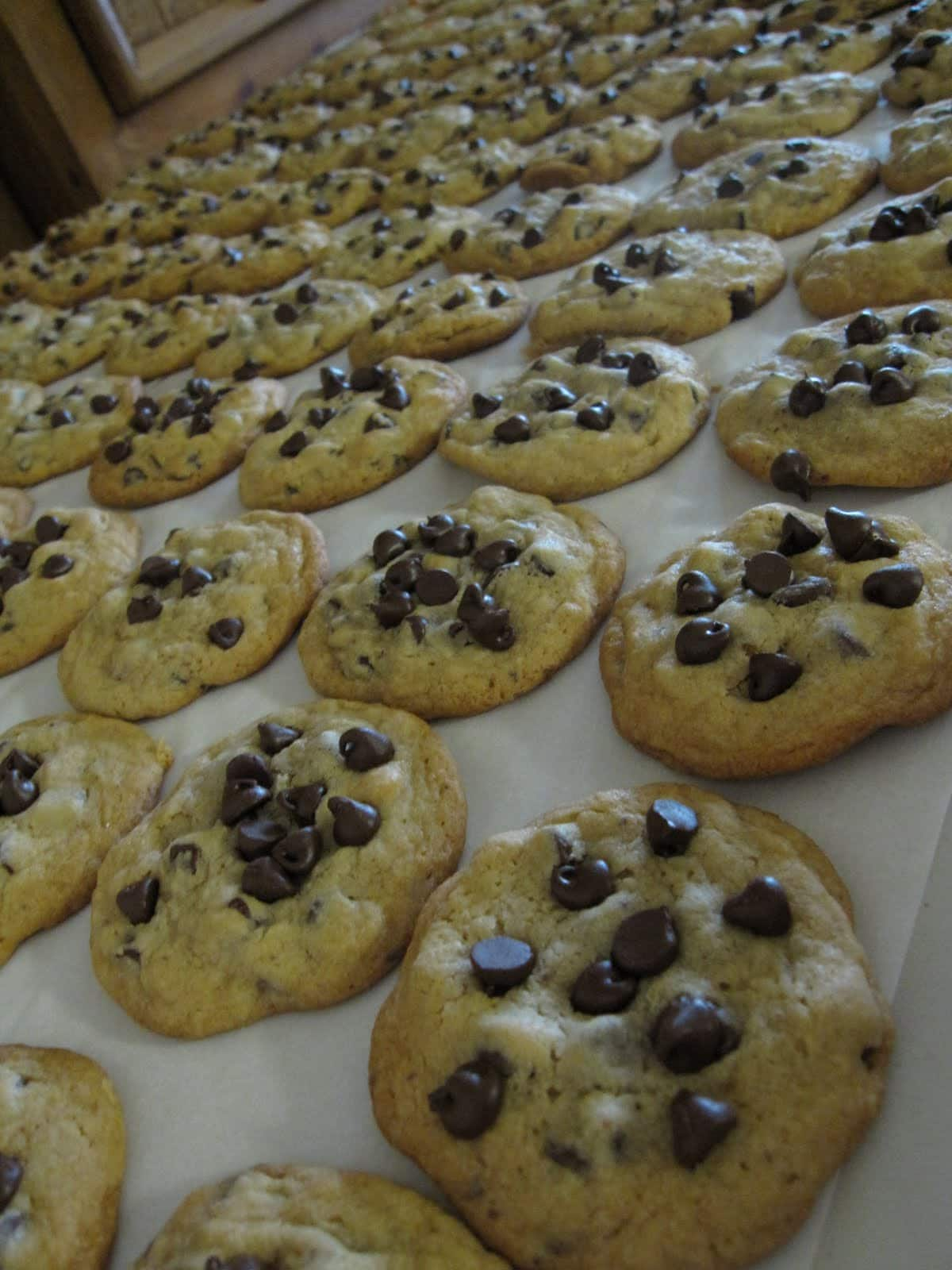 A batch of chocolate chip cookies on parchment paper