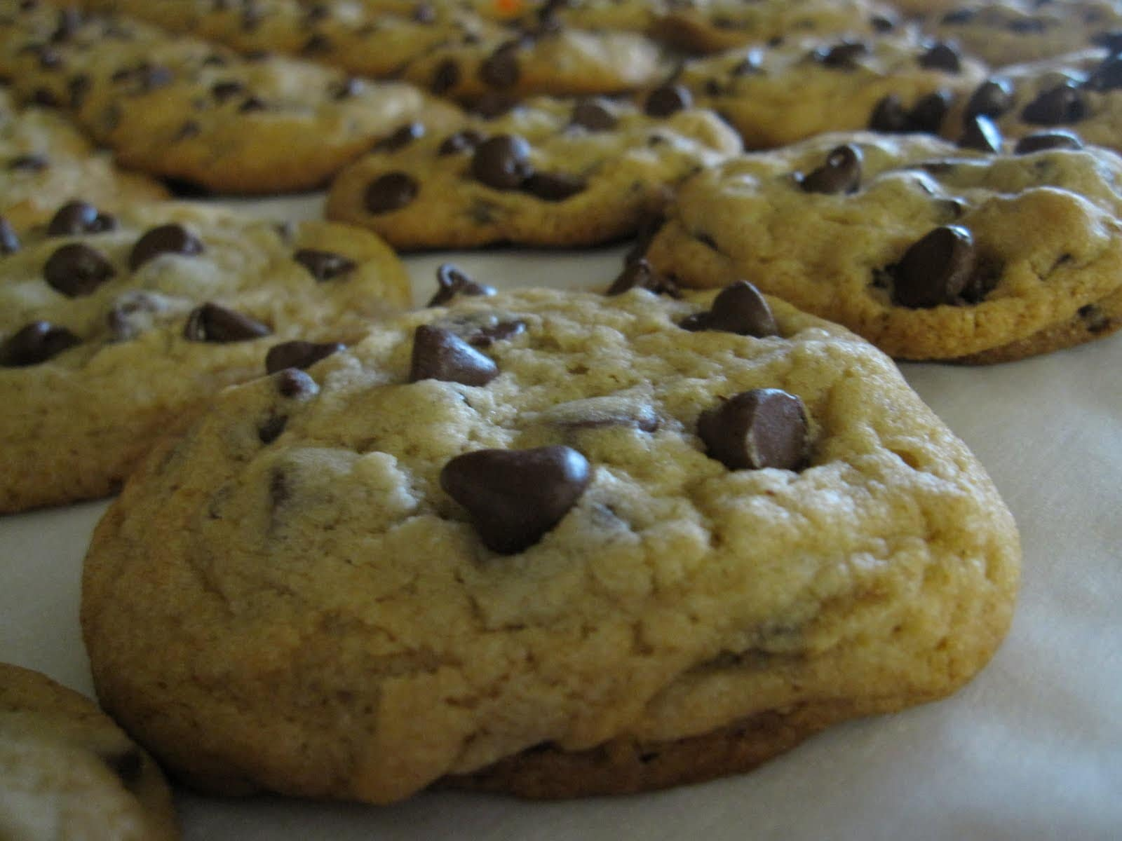 Close-up of a chocolate chip cookie