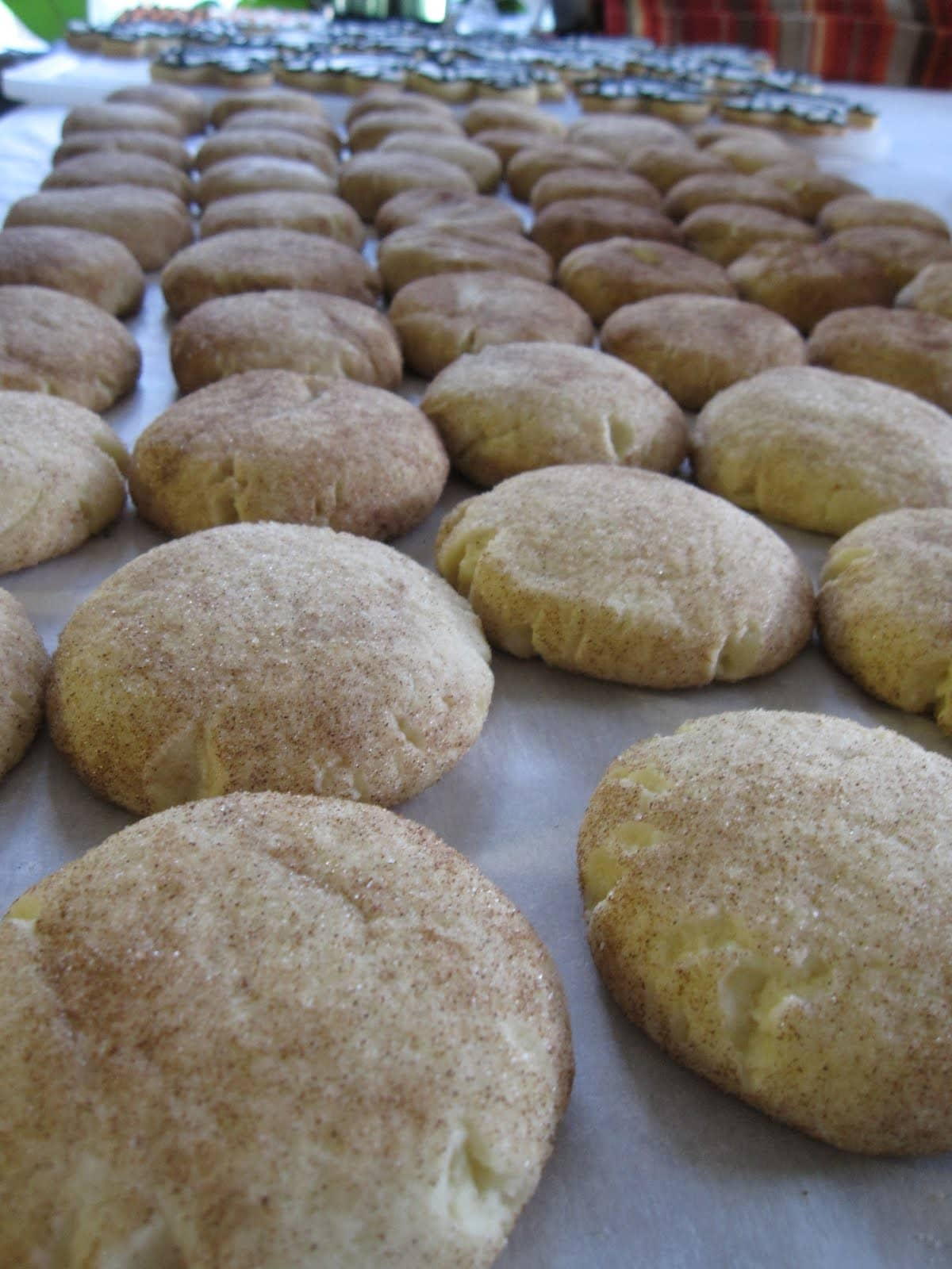A batch of snickerdoodle cookies on parchment paper
