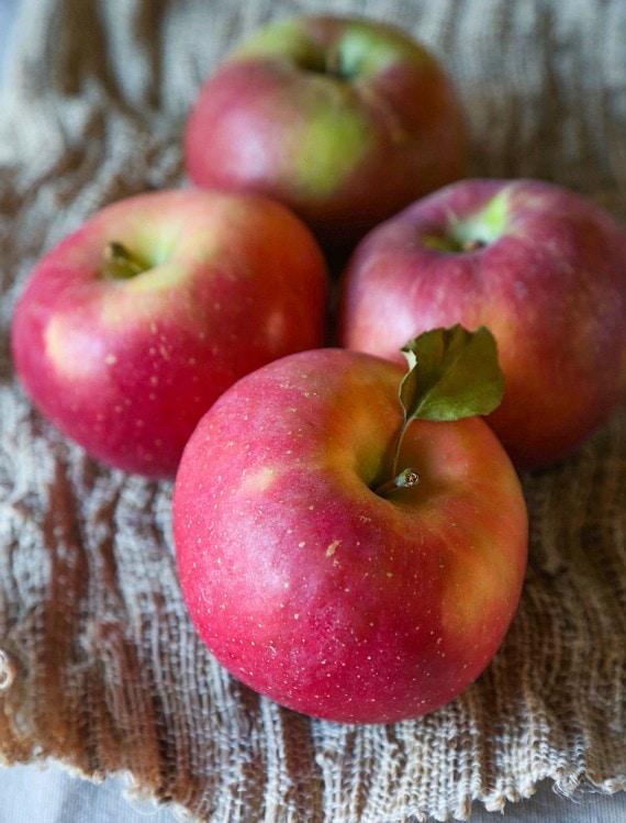 Apples for making apple chips